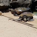 Фотография Sea Life Park Hawaii