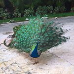 Iberostar Quetzal Playacar照片