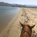 Фотография Naxos Horse Riding Club