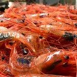 Our Shrimp