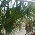 Sea view!!!! Ant infested balcony!!