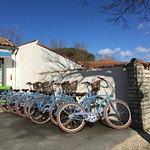 Vélos de type Beach Cruiser et Confort.