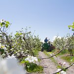 Spring Blossom and Bee Tours