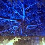 Arbol historico en patio de inquisicion