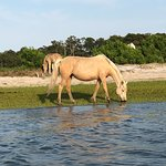 Фотография Assateague Explorer Wildlife Cruises