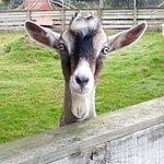 Foto de Sheepworld