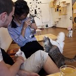 Kitty House - The Cat Cafe照片
