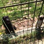 Die 2 Spasshunde