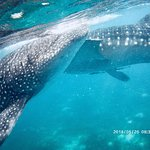 Beautiful creatures.....amazing experience to swim with them