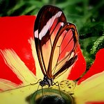 De Orchideeen Hoeve Φωτογραφία