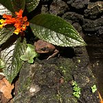 Ecotermales Fortuna照片