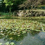 Burnby Hall Gardens and Museum: A general view of the lake