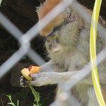 Foto de Wilderness Trails Zoo