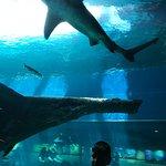 Texas State Aquarium의 사진