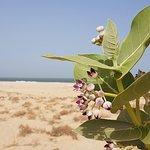 Plage de Nouakchott Foto