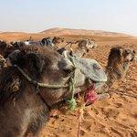 Erg Chebbi camels