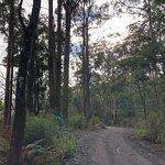 ภาพถ่ายของ Warrawee Forest Reserve