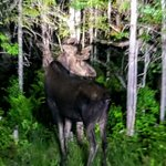 Foto di Pemi Valley Moose Tours