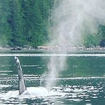 Photo of Campbell River Whale Watching and Adventure Tours