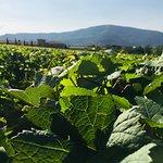 Berlucchi Winery Foto
