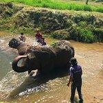 Photo de Ran-Tong Save & Rescue Elephant Centre