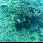 Foto Cham Island Diving
