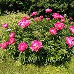 Photo de MGU Botanic Garden