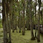 In the swamp garden