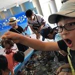 Bilde fra Nagasaki Penguin Aquarium