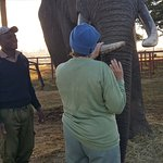 Such a privilege to be so tactile with the elephants! Handlers always observant too. Awesome!