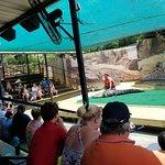 Billede af Wild Adventures Theme Park