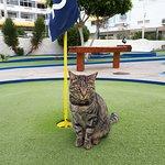 Mini the Minigolf Cat from Taidia