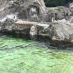 Tokyo Sea Life Park Photo