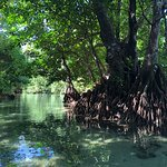 Foto de Vanuatu Ecotours