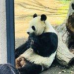 上野動物園の写真
