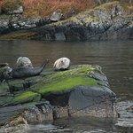 Plockton Harbour Seals