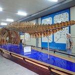 National Oceanographic Museum of Vietnam Foto