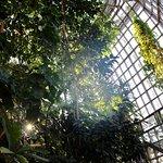 ภาพถ่ายของ Botanischer Garten Berlin