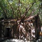 บ้านต้นไม้อันผิง ภาพถ่าย