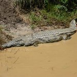 صورة فوتوغرافية لـ Shoreline Hippo and Croc Cruises
