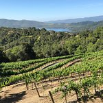 Bilde fra Amizetta Estate Winery