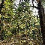 Trees in Mt. Rainier National Park