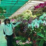 Dalat Flower Park Φωτογραφία