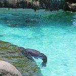 Sea lion pool