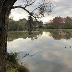Browns Lagoon Albury has an abundance of bird life