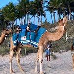 Broome Camel Safaris