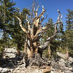 Great Basin National Parkの写真