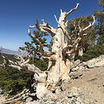 Photo of Great Basin National Park