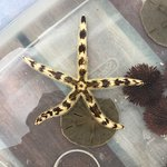 Found a starfish while snorkeling!