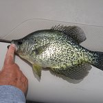 1 of many large crappie caught this vacation!